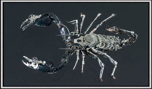 Gaby Wormann, Scorpion - Fine Art Print - Alu Dibond